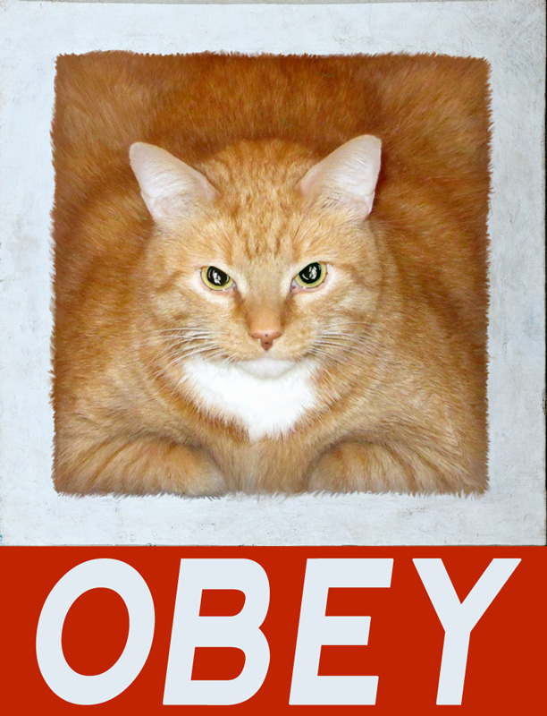 Obey the Cat